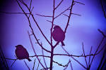 Wallpapers Backgrounds - heart touch sky (category nature birds heart touch sky ladyfi wordpress 1200x800)