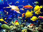 Wallpapers Backgrounds - Tropical Harmony fish sea ocean underwater (ocean fish Tropical Harmony sea underwater paperbackparade blogspot 1600x1200)