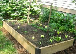 Vertical Garden Vegetables by How To Build A Vegetable Garden Garden Design Garden Design With