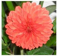 Las flores que nos gustan. Images?q=tbn:ANd9GcTUYYx4w3y5K2NZ4nBq9J7nGfomH6H5Y6ygA815F50K-S3WMPjdeA