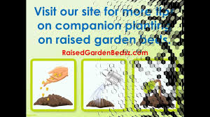 companion vegetable garden layout the best tips for raised bed gardening with companion plants youtube