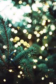 Diy Mini Christmas Trees Pinterest Best 20 Holiday Tree Ideas On Pinterest Beauty P Fall