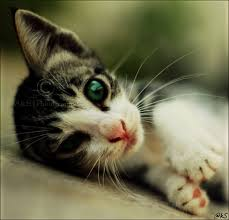 صور حيوانات اليفة Images?q=tbn:ANd9GcTViR3aWMezyQs1ZDsaqwdtWQ0rKnvHT85boffOYWBuTirTTiHFJA