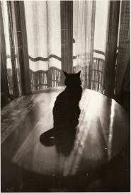 the 1064 best images about cats on pinterest