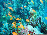 Underwater Aquarium Reef wallpapers