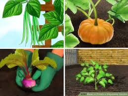 3 ways to create a vegetable garden wikihow