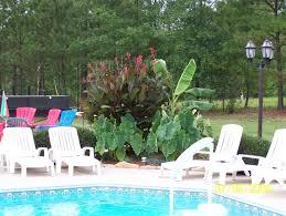 best 25 plants around pool ideas on pinterest landscaping