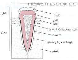 علاج الاسنان طبيعيا  Images?q=tbn:ANd9GcTXuc4OordjXQSKwn5aJ84hyW6ZO5Z3OeRQjGt7F9G9LqDZu0hHfg
