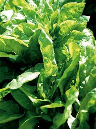 how to grow leafy vegetables and herbs how tos diy