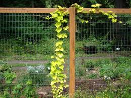 inspired garden fence ideas the latest home decor ideas