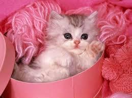 اجمل صور قطط في العالم Images?q=tbn:ANd9GcTZmynEXTlKWzDIkYVgyl8DKUWYfbQOVgcZ0P-8B2WuuETFJoAHHg