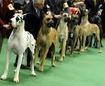 The Frame: 2011 Westminster Kennel Club DOG SHOW