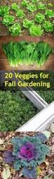 best 20 vegetable gardening ideas on pinterest u2014no signup required
