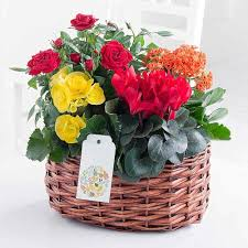 Flowers Delivered Uk - plants delivered plant gifts with free uk delivery flying flowers