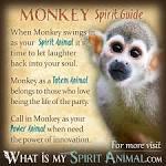 imagem de monkes spiritual meditation n-4
