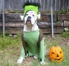 Dog Costumes Halloween 118 Dog Halloween Costumes Images Animals Dog
