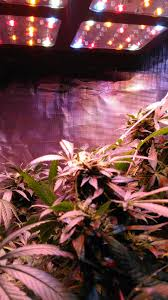 cost effective led grow lights for your indoor garden bb media