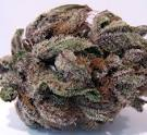 Purple Kush Cannabis Strain Review And Pictures | The Weed Blog - Downloadable