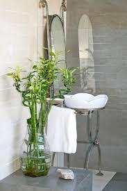 composition florale haute bambou en pot et lucky bambou entretien et symbolique