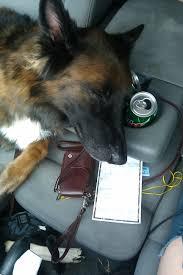 belgian shepherd stuffed animal index of blog wp content uploads 2014 12