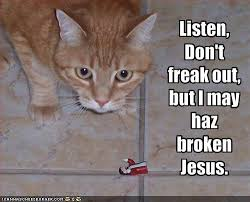 photo funny-pictures-cat-