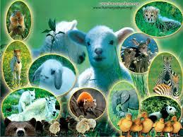 www.aybilgi.net dünyada'ki hayvanlar ce çeşitleri.