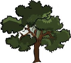 Image result for oak