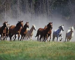 Mis amores los caballos Images?q=tbn:ANd9GcTfTu4XstiSJgTgjg2uAneWh3Xck5_20Y0denVnjK9suEuYwGir