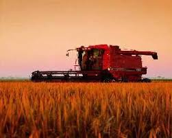 Combine in rice field  Photo  www farmphoto com Canadian Biodiversity Mcgill
