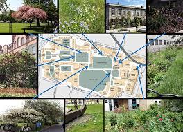 trinity college dublin campus pollinator plan