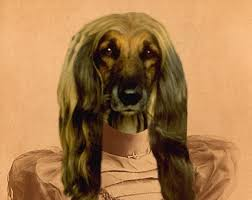 afghan hound long haired dogs afghan hound art etsy
