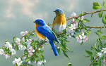 Beautiful Colorful Cute Birds Wallpapers Seen coolpicturegallery (beautiful colorful birds fresh Cute Wallpapers Seen coolpicturegallery coolanimalspics blogspot 1440x900)