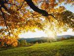 Wallpapers Backgrounds - Autumn Wallpapers Seasons Greetings Trees Forests Scenery