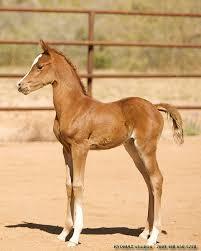 Udomi jednog od konja! - Page 3 Images?q=tbn:ANd9GcTjhdcPR6WYLEpuIzKpI98wQZzIvanqUNln7NvYlhmvXfDx3-qS
