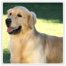 ¿Tenes un perro? Un post para vos!