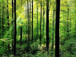 IvyClan Hunting Grounds Images?q=tbn:ANd9GcTlKH57emh8Q-rIwVofyPJJ3Ur9xa4iuqH8jl4GoUl-KNNP5_pN