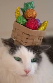 Kitten Costumes Halloween Meowsers Dozen Halloween Costumes Favorite Feline