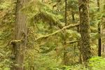 growth rainforest Pacific Rim National Park Vancouver Island (vancouver island Canada Growth Rainforest Pacific Rim National Park British Columbia Wallpaper beauty places 2000x1333)