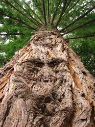 اشجار غريبه Images?q=tbn:ANd9GcTmgMjhWdkyTfP1siWjDFeHxIT-1LNKSz2cArQSc4nHuFjQINDdvA