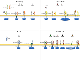 frontiers opposing functions of classic and novel il 1 family