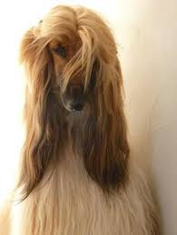 afghan hound long haired dogs this genius ikea hack is the best one yet u2014 and it only costs 10