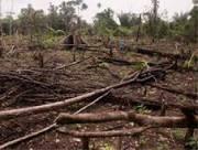 Veto a desmatamento na Amazônia poderia trazer lucro a outras ...