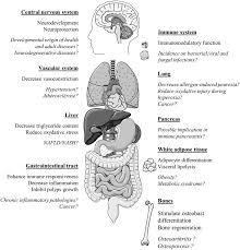 20 surprising health benefits of lactoferrin selfhacked