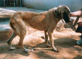 Las comidas mas peligrosas para perros