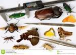 <b>Entomología</b>