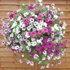 Flowers Plants by Best Flowers For Hanging Baskets Flowers Flower Plants Annual