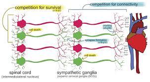Virginia On Map by Reu In Multi Scale Systems Bioengineering University Of Virginia