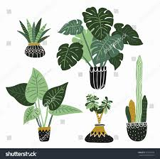 hand drawn tropical house plants scandinavian stock vector