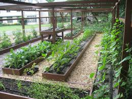 wood raised bed backyard vegetable garden along wire fence and