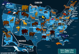 United States Map Delaware by State Animals Of The U S A Map Jennifer Farley Illustration